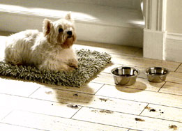 Ron Taylor Carpets, Hardwood Flooring